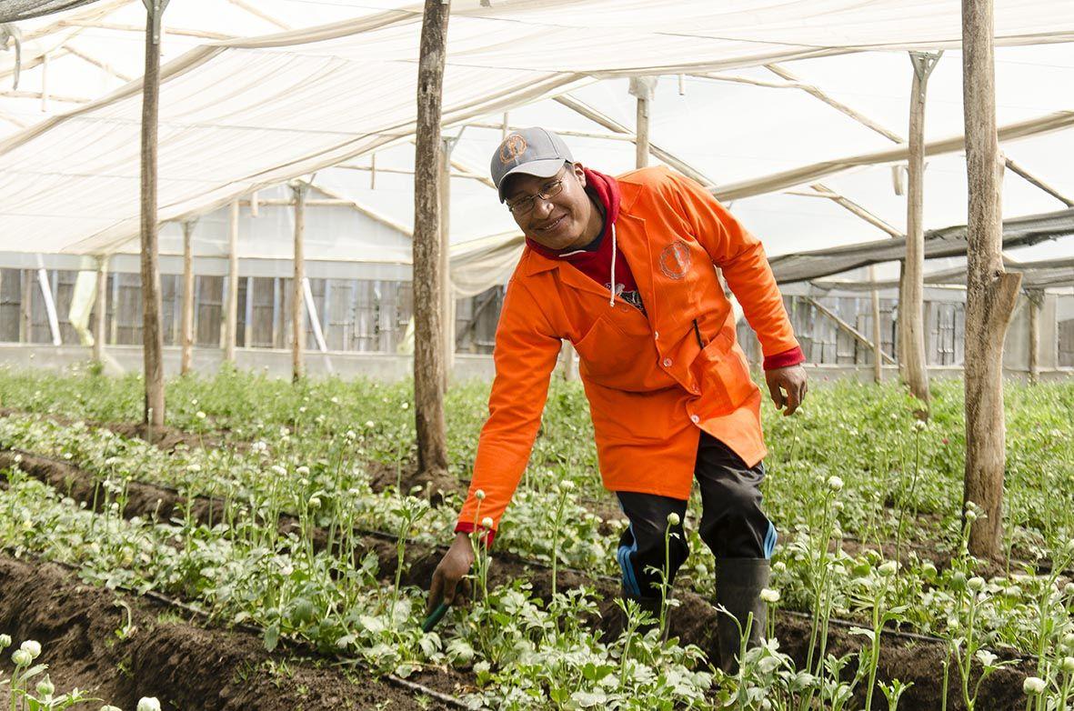 Trabajador - The Chaupi Farm