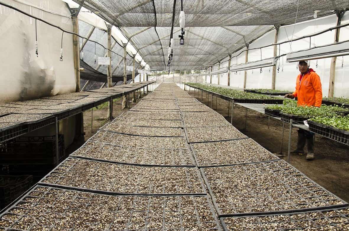 Proceso de Cultivo - The Chaupi Farm