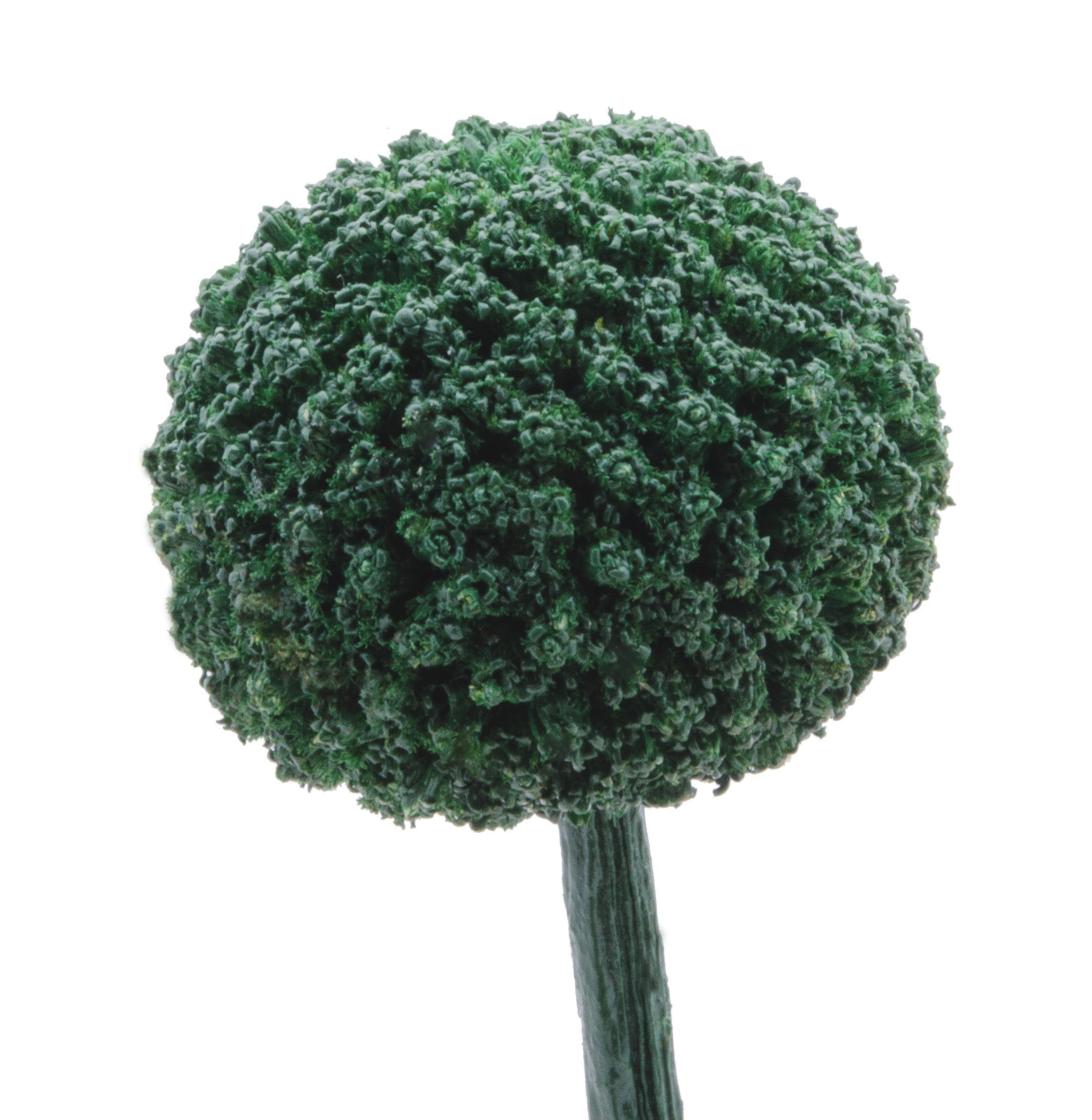 Craspedia Green